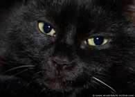 Lucky mit schwarzblauen Augen