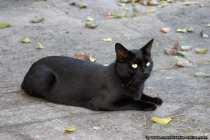 Unsere Katzen waren wie immer am streunern und abends kommen sie, wenn sie hören, wieder in's Haus. Doch eines Abends, wollte Mogli, auch einer unserer schwarzen Kater, mal wieder nicht hören. Als man so vom Bürofenster einen schwarzen Kater aus dem Augenwinkel aus dem Fenster auf dem Fenstersims herumspazieren sah.... da packte man zu und schimpfte erst einmal, wo er sich dann wieder rumtrieb und nicht auf seinen Namen hörte. Ups, Du bist ja garnicht Mogli.... und ab dann wollte der neue Kater aber nicht mehr gehen. Er spazierte zur Terrassentür und schaute sich in der Wohnung alles genau an, aha toller Katzenbaum, Fressi lecker, Schlafkörbchen und viele Extras. Toll, hier bleib ich... und so sollte es sein.