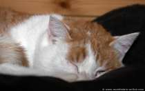 Suse mussten wir leider abgeben, da Ihr Schlafplatz immer von unserer weiteren Katze Kimba vollgepinkelt wurde. Suse war sehr tolerant und bestimmt dankbar für ihre letzte Rettung. Sie kratzte und schabte an unserer Eingangstür im kalten Dezember 2011, nach dem Motto: Lasst mich rein, ich brauche Hilfe. Und sie bekam Hilfe!