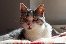 Micky, die alte Katze hat mehrere Körbchen und besitzt als einzige Samtpfote von insgesamt vier Fellnasen einen separaten Bereich im Erd- Kellergeschoss mit Katzenklappe. Überraschungen mit ungebetenen Gästen sind manchmal nicht ausgeschlossen.