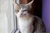 Das Salben der Augen und durch das tägliche Geben des Medikaments hoffen wir auf eine Besserung von Katzenschnupfen und das die Augen nicht weiter geschädigt werden und sich die vorhandene Schädigung zurückbildet. Es besteht zumindest eine Chance, da er noch recht jung ist. Er ist nicht nur jung, sondern auch sehr verspielt und wirbelt ganz schön im Haus rum. [EOS5D Mark4 | ISO800 | f2,8 | 1/640s | 50mm]