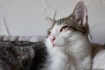 Europäische Kurzhaarkatze 3-4 Monate alt. Der Wirbelwind in einem Katzenbaumkörbchen. Vier Katzenbäume auf zwei Etagen stehen zur Verfügung, welche alle einen Fensterausblick ermöglichen. [EOS5D Mark4 | ISO400 | f3,2 | 1/160s | 50mm]