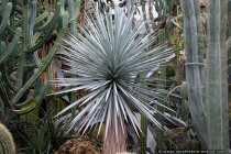 Kakteenland - Land of cactus