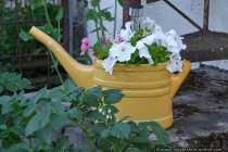 Eine ausgediente 10 Liter Giesskanne muss nicht weggeworfen werden. Diese kann, wenn man sie modifiziert, immer noch als Blumengiesskanne herhalten, nachdem man diese mit Blumenerde gefuellt hat. Die Giesskanne als Blumendekoration und Blickfang.