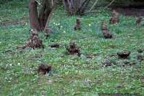 Baumwurzel - Tree root