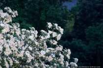 15 Sekunden Langzeit-Belichtung - 15 Second Nature photo