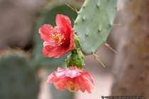 Exotisch - Exotic plant