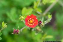 Fotografiert im botanischen Garten - Nature Picture