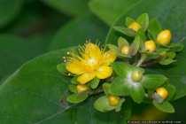 Blumenbild - Flower-Picture
