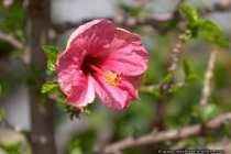 Faszinierende Blume - Botanical Garden