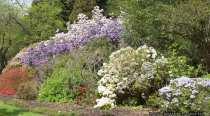 Bunt botanisch