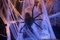 Halloween ist Gruselzeit - Black Spider - Schwarze Spinne
