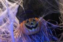 Halloweenkuerbis im Spinnennetz