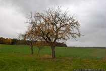 Bäume und Landschaft im Herbst - Autumnal Nature