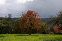 Die natürlichen Farben des Herbstes.