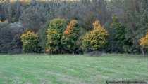 Herbst im Oktober - Baumverfaerbung