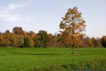 Herbstbaeume im Oktober