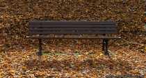Herbstbank - Herbstblätter - Herbstlaub und inmitten eine Sitzbank