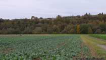Reiter im Herbst