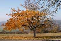 Bei herbstlichen Temperaturen verfärben die Blätter und die Bäume lassen diese dann nach und nach zu Boden fallen, bis der Baum nur noch kahl und trostlos in der Landschaft steht.