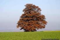 Iim Herbst verfärben sich, wie jedes Jahr, die Blätter und ein farbenfrohes Schauspiel stellt sich dem aufmerksamen Betrachter zur Verfügung.