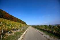 Herbstlich in den Weinbergen
