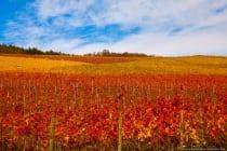 Spätherbst ist von Mitte Oktober bis Ende November. Das Bild wurde am 31. Oktober fotografiert mit einer Canon EOS Vollformatkamera bei ISO160 sowie einer Blende von f6,3 und einer Belichtungszeit von 1/640 Sekunde @105mm Brennweite.