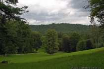 Baumlandschaft - Green Landscape