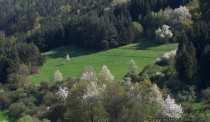 Die Landschaft im Odenwald aufgenommen Mitte April. Die Natur blüht!