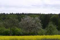 Die Natur im Mai