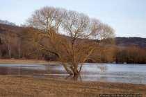 Überschwemmungen - Ein Baum im Wasser hält sich tapfer. Ihm bleibt auch nichts anderes übrig.