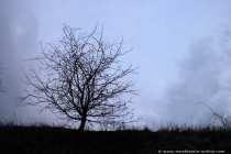 Ein kahler und einsamer Baum in der kalten Jahreszeit - A naked and lonesome tree into the cold season