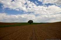 Der Baum als Blickfang und Motiv. Das richtige Wetter mit Wolkenspiel und zwei unterschiedliche farbliche Landschaftsakzente ergaenzen das Baummotiv.