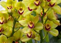 Paradies der Orchideen - Orchid paradise