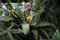 Orchidee - Verschiedene Exemplare