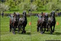 V6A3634-Horses