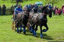 V6A3721-Pferde-mit-Wagen