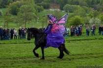 V6A4133-Pferde-Show-Schmetterling