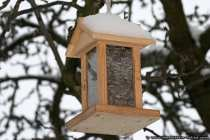 Eine haengende Nahrungsstelle fuer die kleinen Sperlingsvoegel
