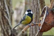 Die Vögel freuen sich über die halbierte Kokosnuss, welche mit Vogelfutter gefüllt wurde.