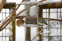 Vogelfutterstation aus Metall, Drahtgeflecht mit Sitzmöglichkeit und Überdachung.  [EOS5D Mark4 | ISO800 | f5,6 | 1/640s | 400mm]