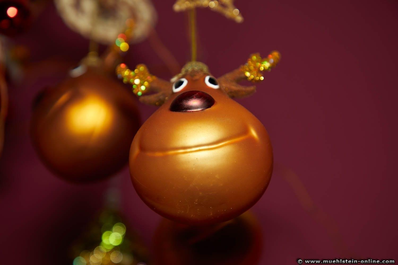 Weihnachtsbilder Elch.Photo Gallery Still Life Fotografie