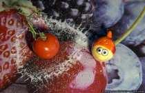 Der kleine Salzfisch hat die reife Tomate mit seiner Geheimwaffe umzingelt.