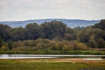 Der Landesbund für Vogelschutz verwaltet die Vogelinsel im Altmühlsee