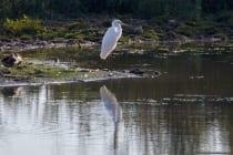 Fotografiert auf der Vogelinsel im Altmühlsee bei Muhr.