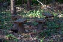 Holzpilze