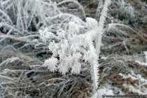 Die eisige Kälte macht auch nicht vor Blumen und Pflanzen halt.