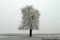 Ein Eisbaum in einer kargen Landschaft.