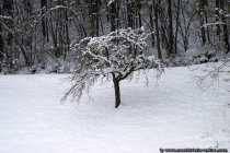 Baum im Wintermantel. Zart gekleidet und weiß gedeckt.