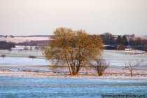 Ein schneefreier Baum in einer Schneelandschaft.